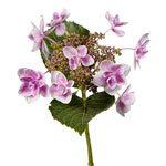 Raspberry Cream Hydrangea Stem View