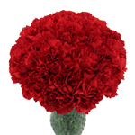 Red Carnation Flowers In a vase