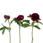 Peonies_Wedding_Red_Flowers
