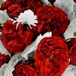 Red Garden Rose and Dusty Miller DIY Wedding Flowers up close