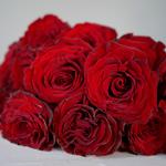Red Heart Garden Rose Bunch
