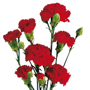 Red Mini Carnation Flowers FlatLay