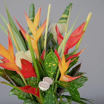 Red Heliconia Tropical DIY Flower Collection