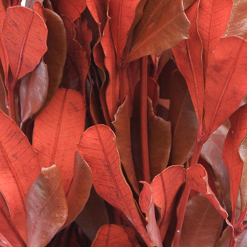 Red Tinted Integrafolia Greenery