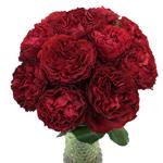 Red Velvet Garden Wholesale Roses In a vase
