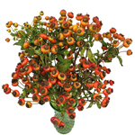 Wholesale greenery fresh cut rose hips filler flower bunch sold as bulk