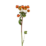 Single stem of fresh cut greenery rose hips filler flowers for sale near me as delivery