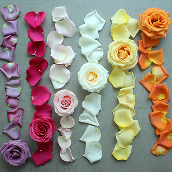 Roses and Petals Choose Your Colors DIY Flower Kit Flatlay