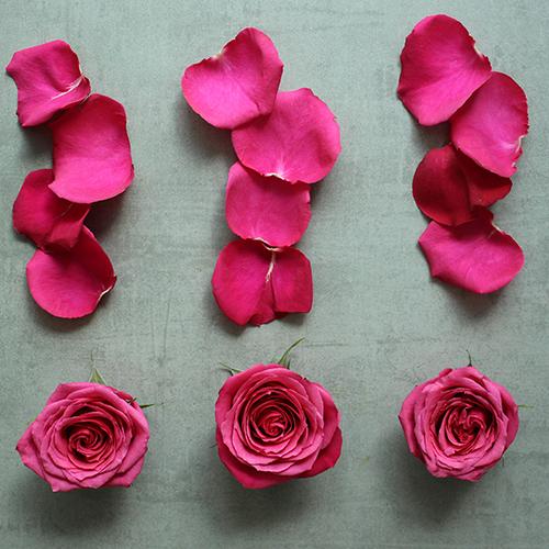 Roses and Petals Hot Pink DIY Flower Kit Flatlay