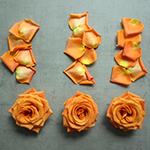 Roses and Petals Orange DIY Flower Kit Flatlay