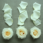 Roses and Petals White DIY Flower Kit Flatlay