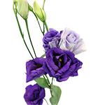 Purple Bulk Lisianthus Flowers