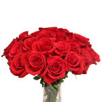 Rouge Baizer Red Wholesale Roses in a Bunch