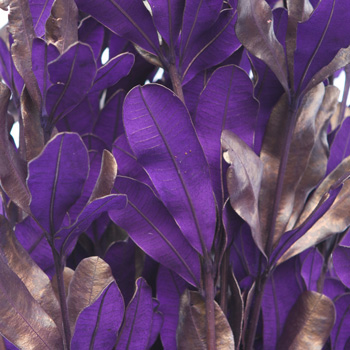 Royal Purple Tinted Integrafolia Filler