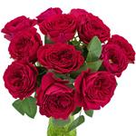 Rubine Red David Austin Wholesale Roses In a vase