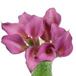 Lavender Mini Calla Lilies