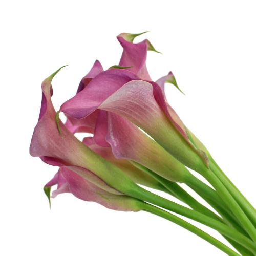 Deep Lavender Mini Calla Lily Flower