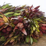 Bulk Wreath Packages Saffari