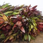 Bulk Wreath Packages Saffari