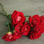 Salsa Red Orange Spray Rose Bunch