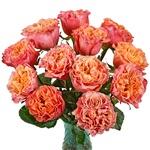 Salsa Rhythm Orange Garden Wholesale Roses In a vase