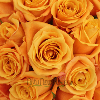 Sari Golden Orange Bulk Roses Up Close