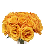 Sari Golden Orange Bulk Wholesale Rose in a Bunch