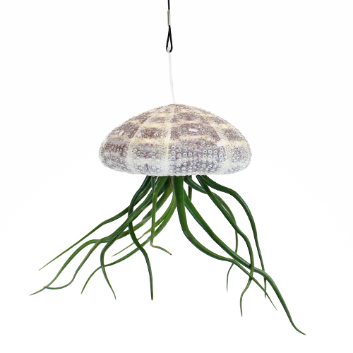 Hanging at the Beach Sea Urchin Airplant