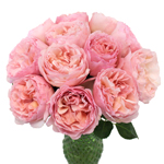 Seashell Beach Pink Garden Wholesale Roses In a vase