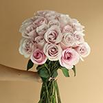 Secret Blush Garden Wholesale Rose Bunch in a hand