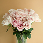 Secret Blush Garden Wholesale Roses In a vase