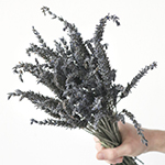 fresh lavender flowers sold in wholesale bunches