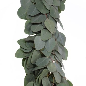 Silver Dollar Eucalyptus Garland Wholesale Greenery Up Close