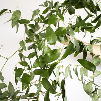 Smilax Wedding Vine