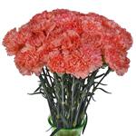 Solex Orange Carnation Flowers In a vase