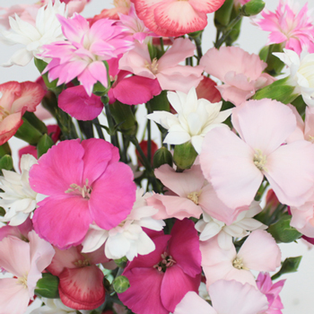 Assorted Solomio Wedding Flower Mix