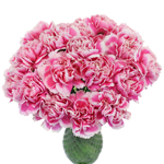 Soraya Pink Carnation Flowers In a vase