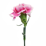 Soraya Pink Carnations side stem