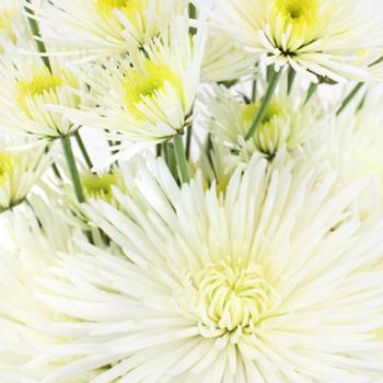Wicked White Wedding Flower Pack