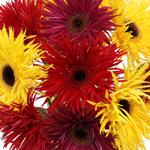 Bulk Yellow Gerber Flower