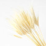 Dried wheat grass wholesale flowers