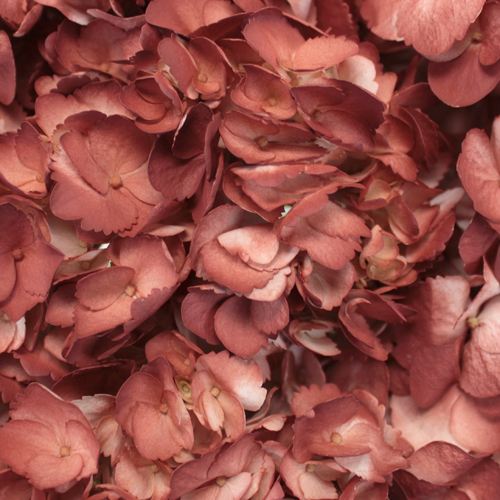 Terra Cotta Hydrangea Wholesale Flower Up Close