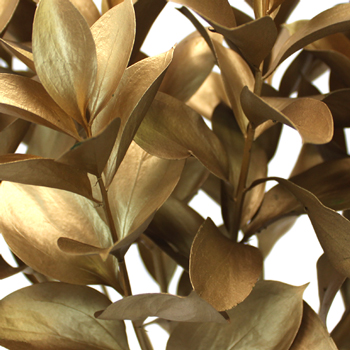 Golden Ruscus Wedding Greenery