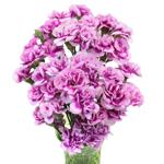 Trendy Mini Carnation Flowers In a vase