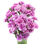 Bulk Purple Mini Carnation Flowers