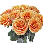Tropical Bellini Garden Wholesale Roses In a vase