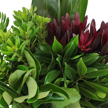 Tropical Wedding Greenery DIY Flower Kit Up Close