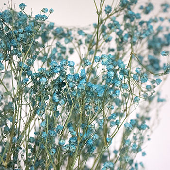 Crystal Cove Turquoise Dried Baby's Breath