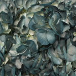 Victorian Blues Airbrushed Hydrangea Flower Up Close
