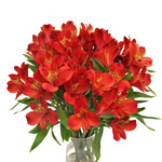 Victory Red alstroemeria Wholesale Flower In a vase